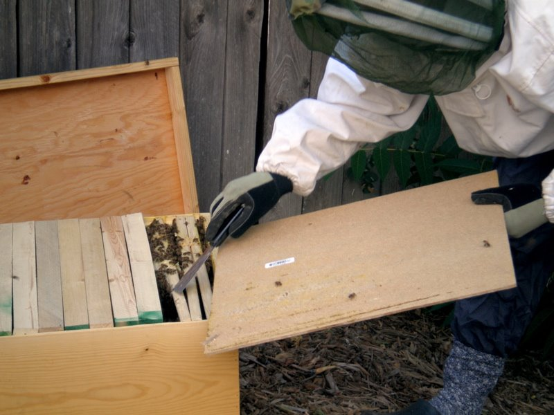 Denver Officials Threaten to Jail Backyard Beekeeper
