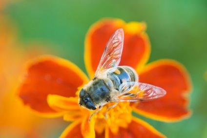 Top Ten Bee Facts Video
