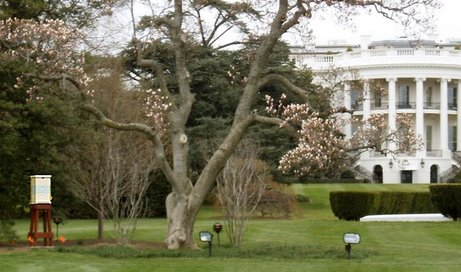 I saw the White House Bees!