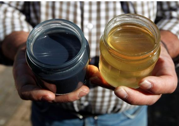 Sacrebleu! French Honeybees Produce Mysterious Blue Honey
